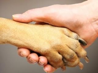 """Akcija """"Padėkime beglobiams gyvūnams"""""""
